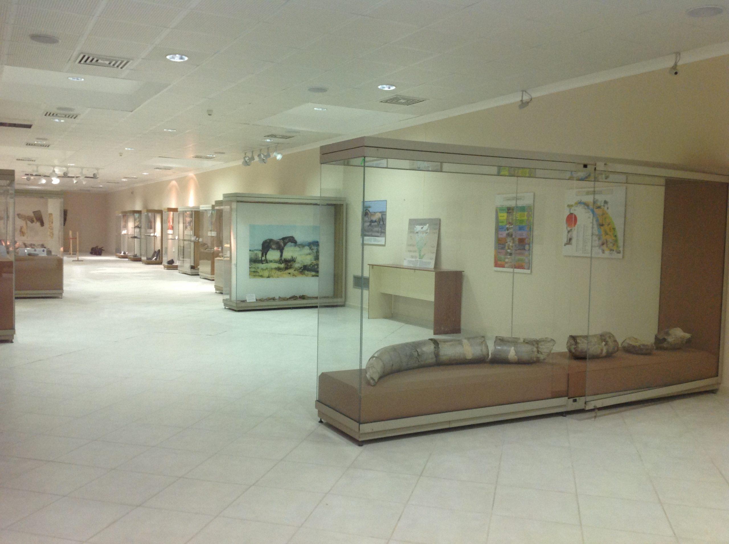 Εκθέματα @Ιστορικό-Παλαιοντολογικό Μουσείο Πτολεμαϊδας