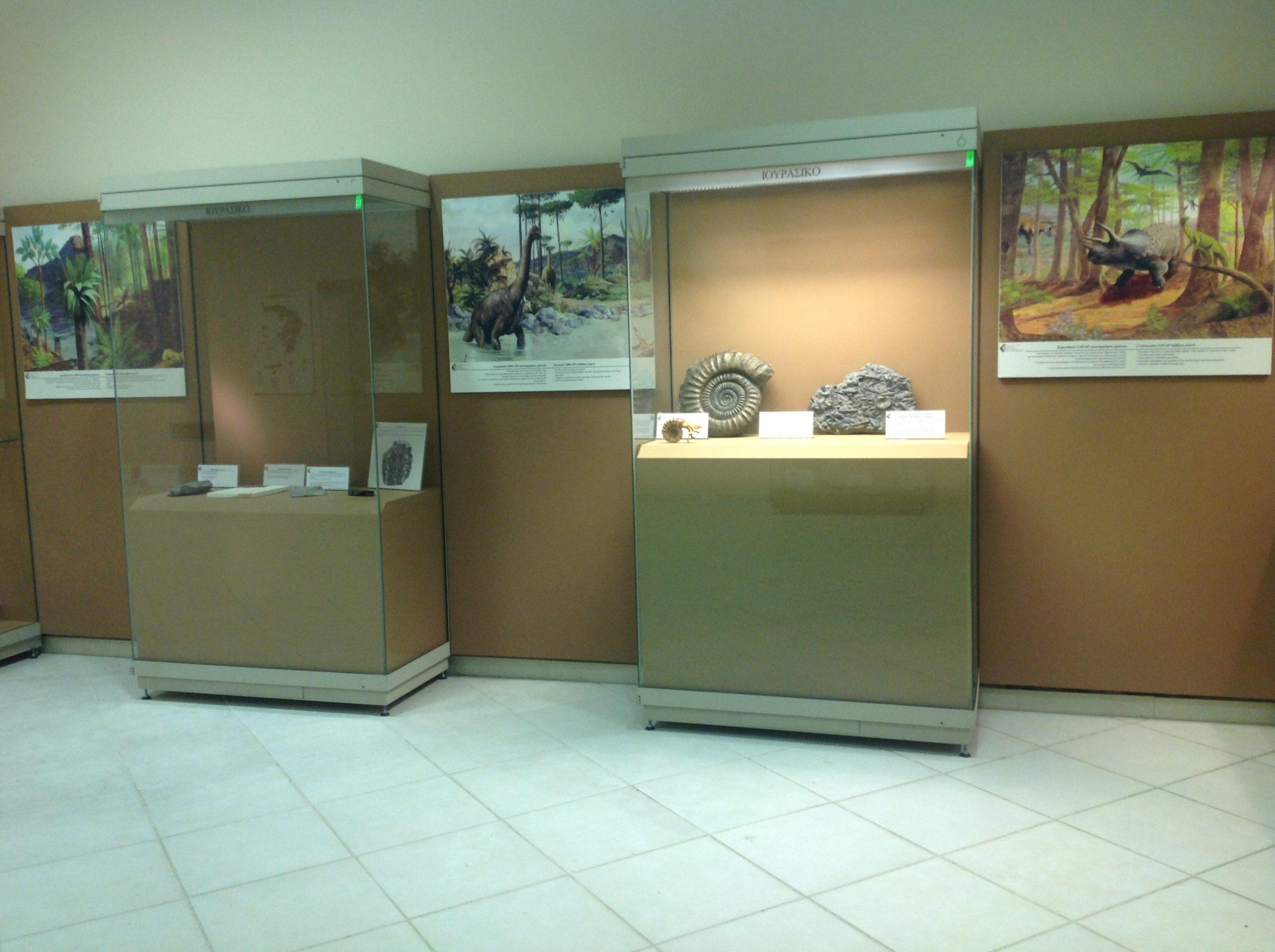 Παλαιοντολογικά εκθέματα Μουσείου © Ιστορικό-Παλαιοντολογικό Μουσείο Πτολεμαϊδας
