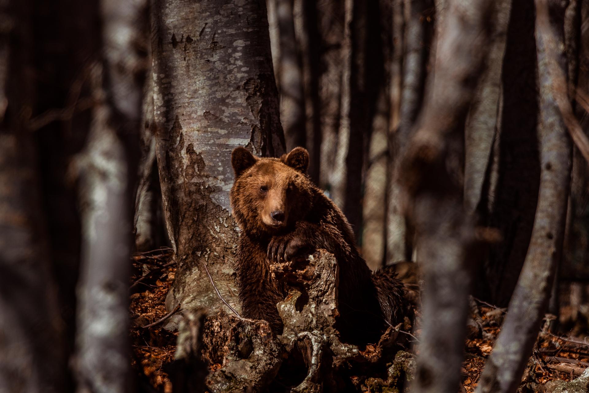 Καταφύγιο Αρκούδας © Αρκτούρος | Arcturos